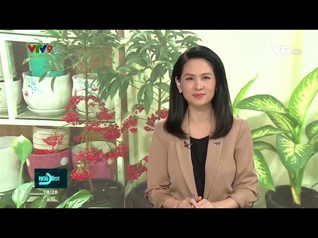 Cách mua cây cảnh - hoa ngày Tết 2021 không lo dịch bệnh | Vườn Cây Việt