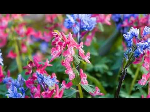 Garden Visits - RHS Wisley, Surrey - April
