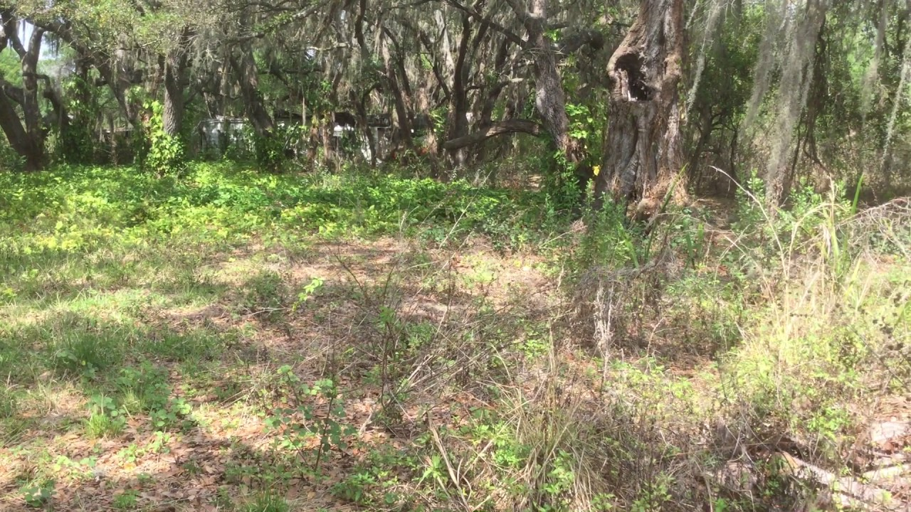 10 Acres For Sale In Central Florida Sebring Doovi