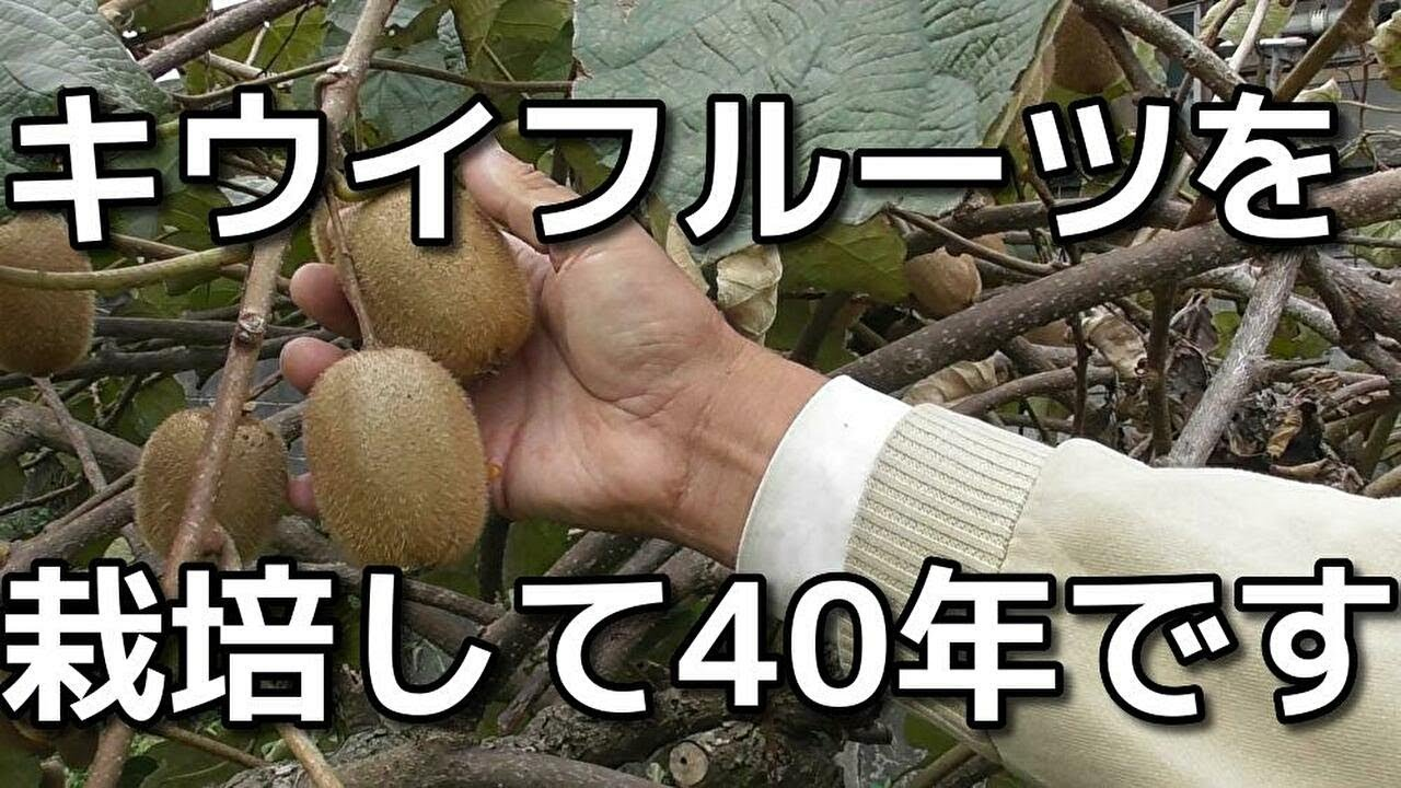 栽培 キウイ フルーツ