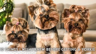 10 Things I wish I Knew Before Getting A Yorkie