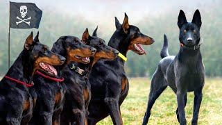 These Are 10 Smartest Dog Breeds Ever