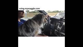 Fido Nods off in a car ride.