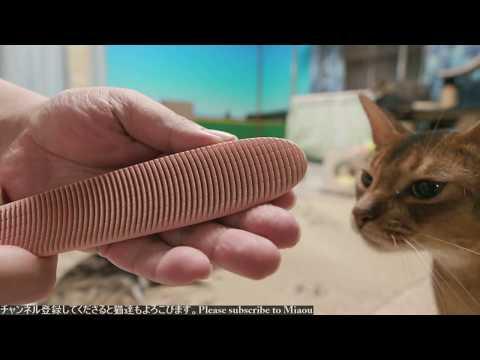 2018.7.29 猫日記   Cats & Kittens room 【Miaou みゃう】
