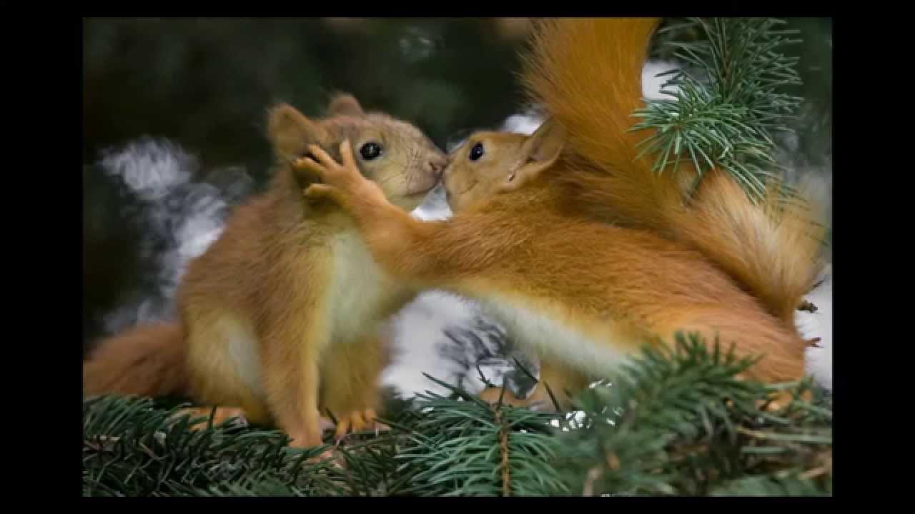 САМЫЕ лучшие фото - природа и животные - YouTube