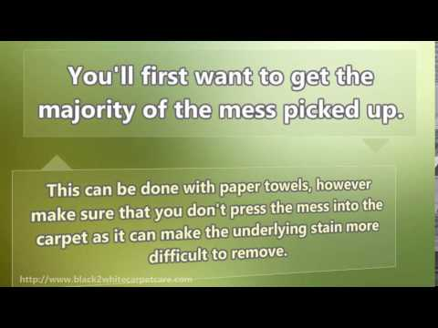 How to Remove Dog Poop from Carpet in Palm Desert Ca