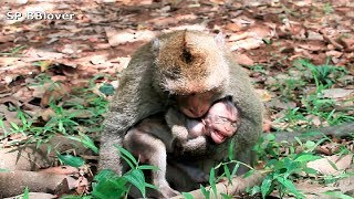 Maria And Kari 5 - King Monkey Donald Hopeless To Lured Baby To Stop Cry