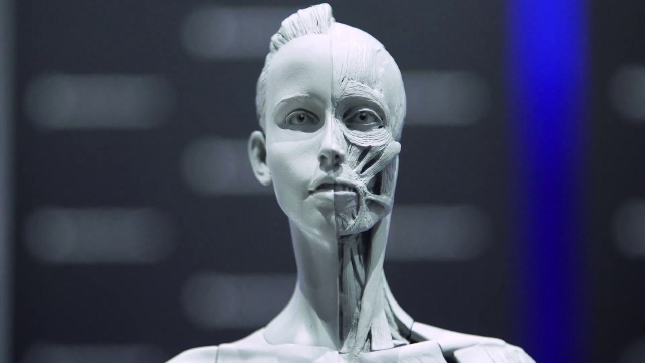 Download Anatomy Tools' Sculpting Reference Maquettes