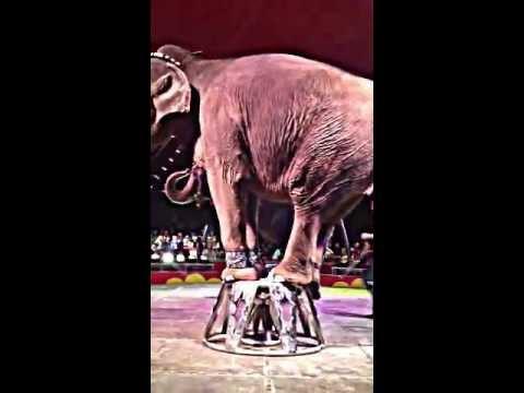 El Katif Shrine Circus, first time seeing real Elephants! 2013