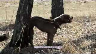 Брошенную собаку доставили в приют