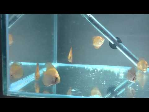 Discus Feed