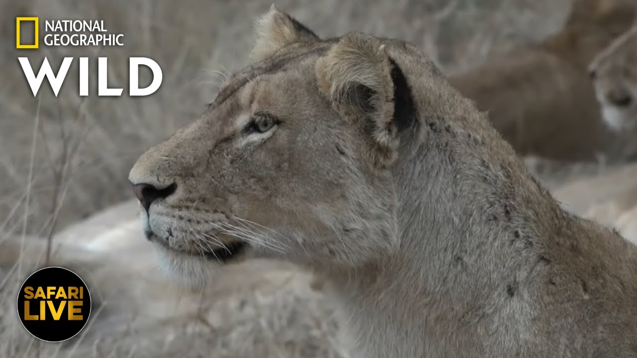 Safari Live - Day 382 | Nat Geo Wild