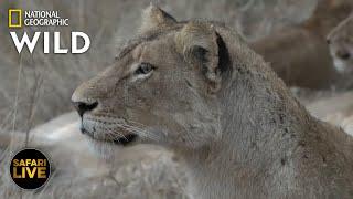 Safari Live - Day 382 Nat Geo Wild