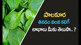 పాలకూర  Palakura benefits in telugu   Health Benefits Of Eating spinach   Palakura recipes in telugu