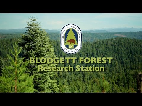 """Blodgett Forest Research Station"""