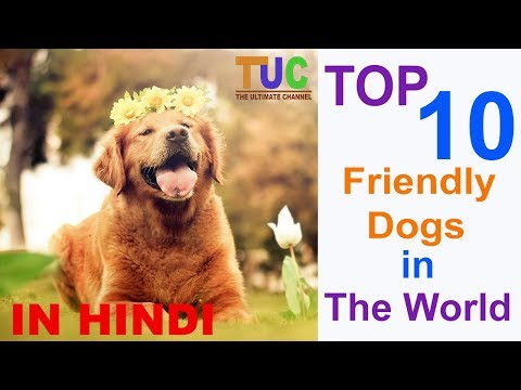 Top 10 Friendly Dog's | Dog Information | Popular Dogs | The Ultimate Channel