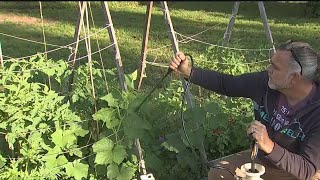 Trellising plants is 'super important'
