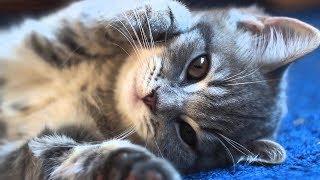 Котята и милые котики ) Самое милое видео 2018