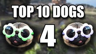 Top 10 Dogs 4