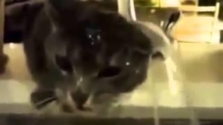 Приколы Самые смешные ролики про животных