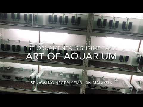 1st Ornamental Shrimp Farm In Malaysia