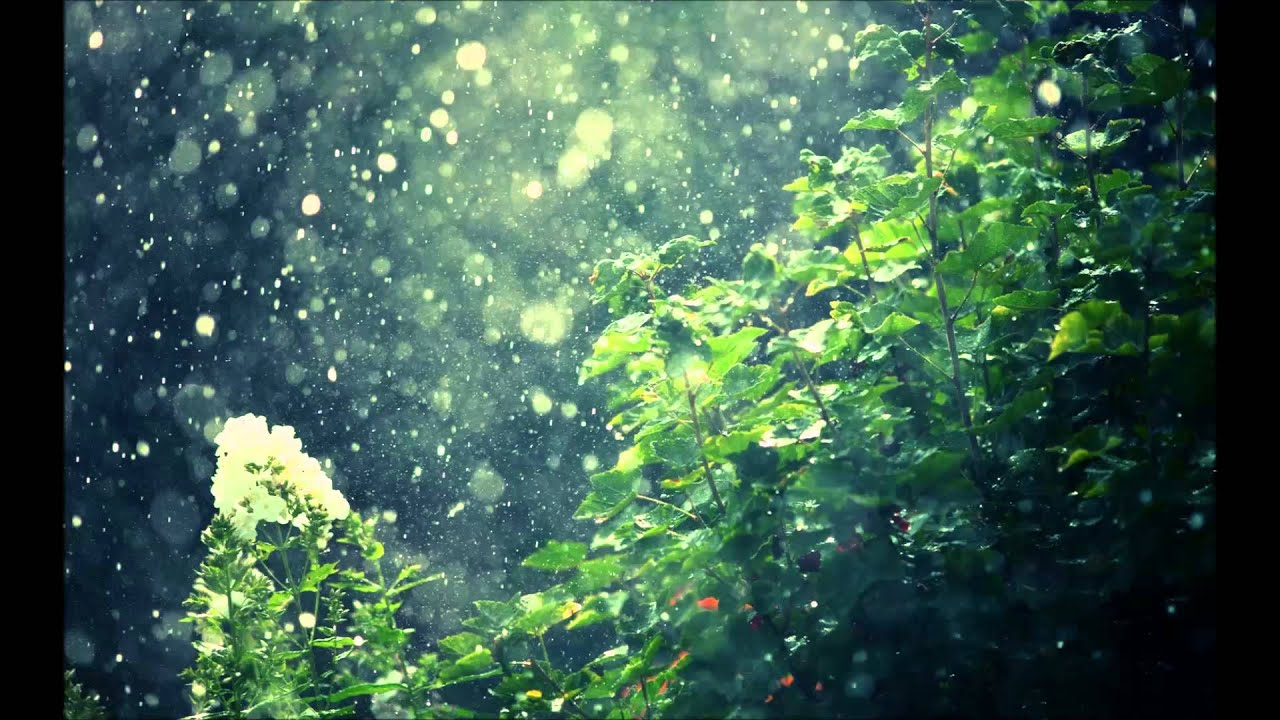 Drop Of Water Falling From A Leaf Dark Background Wallpaper Cơn Mưa Hạ V A Youtube