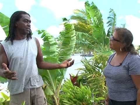 Gardens of Antigua: Shines