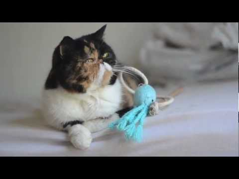 Lazy Pudge the Cat with a Toy on Her Head
