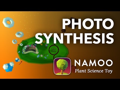 Plant Biology with NAMOO: Photosynthesis