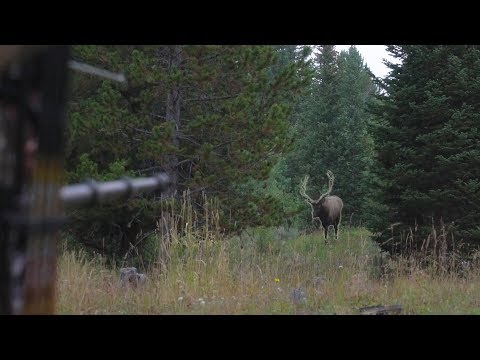 BOW HUNTING ELK IN GRIZZLY COUNTRY - EP 14 - LAND OF THE FREE