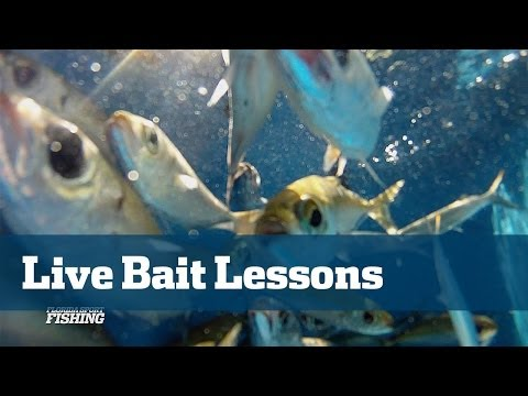 Catch And Keep Your Own Live Bait Everything You Need To Know Right Here - Florida Sport Fishing TV