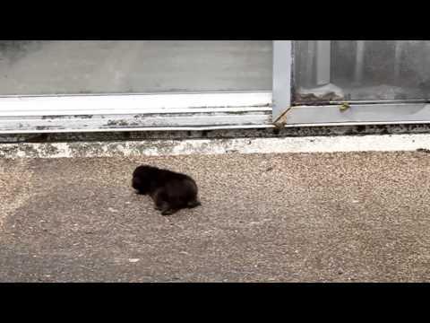 Newborn Kitten and Mother