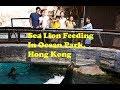 Sea Lion Feeding in Ocean Park, Hong Kong