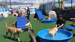 Oh My Dog Agility Park Vancouver!