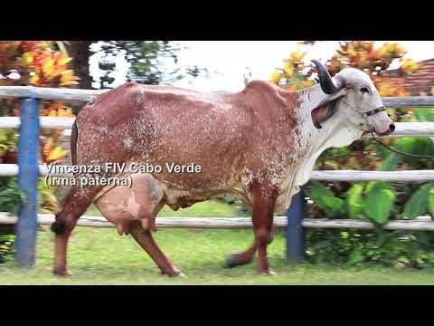 LOTE 19 – FEILANDIA FIV CABO VERDE JCVL3455