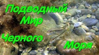 Подводный мир Черного Моря Креветки Крабы Рыбы Подводная съемка Рыбалка на море Красота