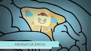 TRIBUN-VIDEO.COM - Alzheimer adalah penyakit otak yang mengakibatkan penurunan daya ingat, kemampuan.