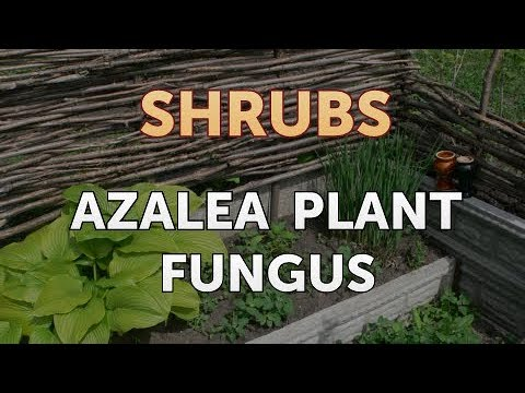 azalea-plant-fungus