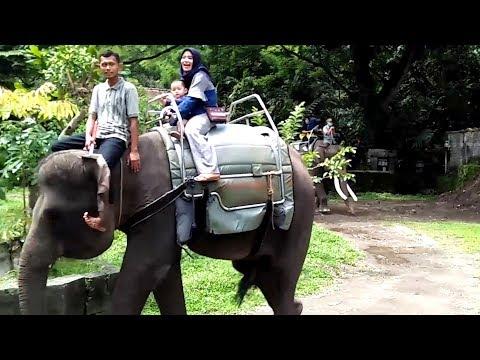 Azufi Berani Naik Gajah Di Kebun Binatang Gembira Loka Yogyakarta