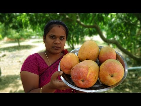Fresh Mango Juice Making in My Village | How To make Mango Frooti at Home