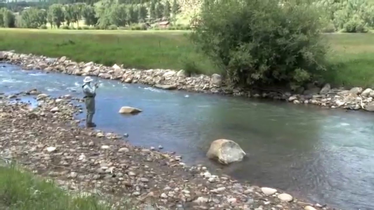 Fly fishing on the north fork of the south platte river in for South platte river fishing