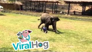 Elephant Comes To The Rescue || ViralHog thumbnail