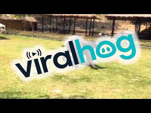 Доказ за нивната добрина: Слон се затрчува да му помогне на нападнат човек