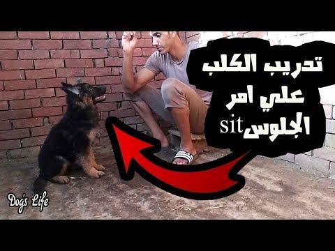 تدريب الكلاب (2) ازاي تدرب كلبك علي امر الجلوس (sit) بطريقه سهله جدا 101