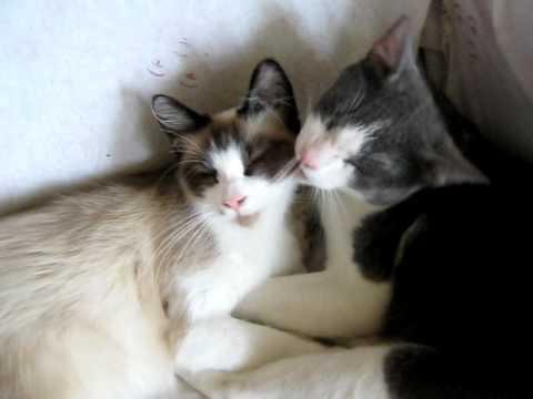Gatos Enamorados Youtube