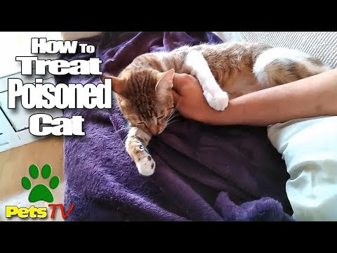 LOOK HOW TO TREAT A POISONED CAT
