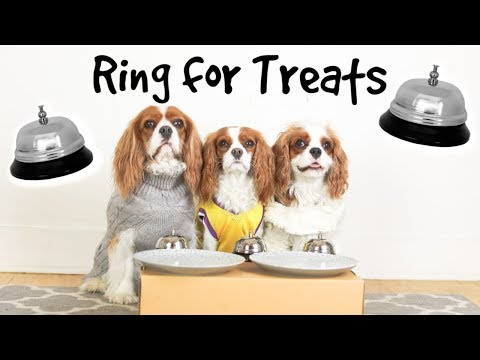 THREE DOGS RINGING BELL FOR TREATS?!