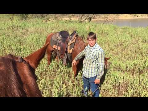 Real Wild Cow Catching By The Barrett Boys From Texas