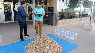La campaña 'No más colillas en el suelo' prevé recoger 200.000 colillas este verano en Mallorca