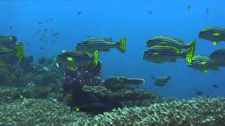 Bali Dive Safari Island Tracking Paul Ranky Copyright VideoClip20